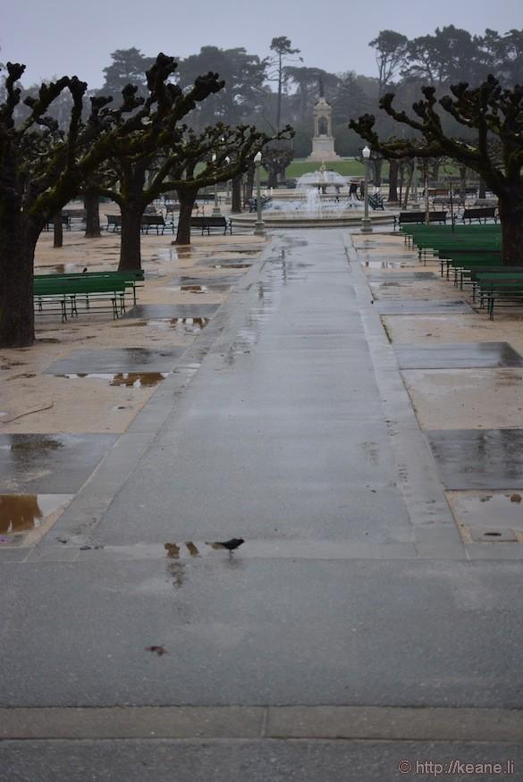 Golden Gate Park in the rain