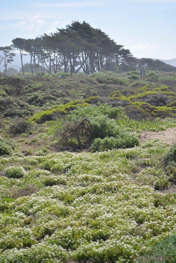 Lush Plants at Dunes Beach in Half Moon Bay