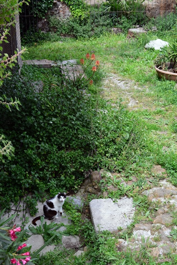 Cat Sanctuary in Largo Argentina in Rome