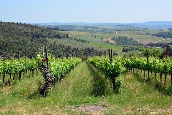 Vineyard with a View at Tenuta Casanova