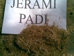 Jerami padi kering yang telah di haluskan/ di selep