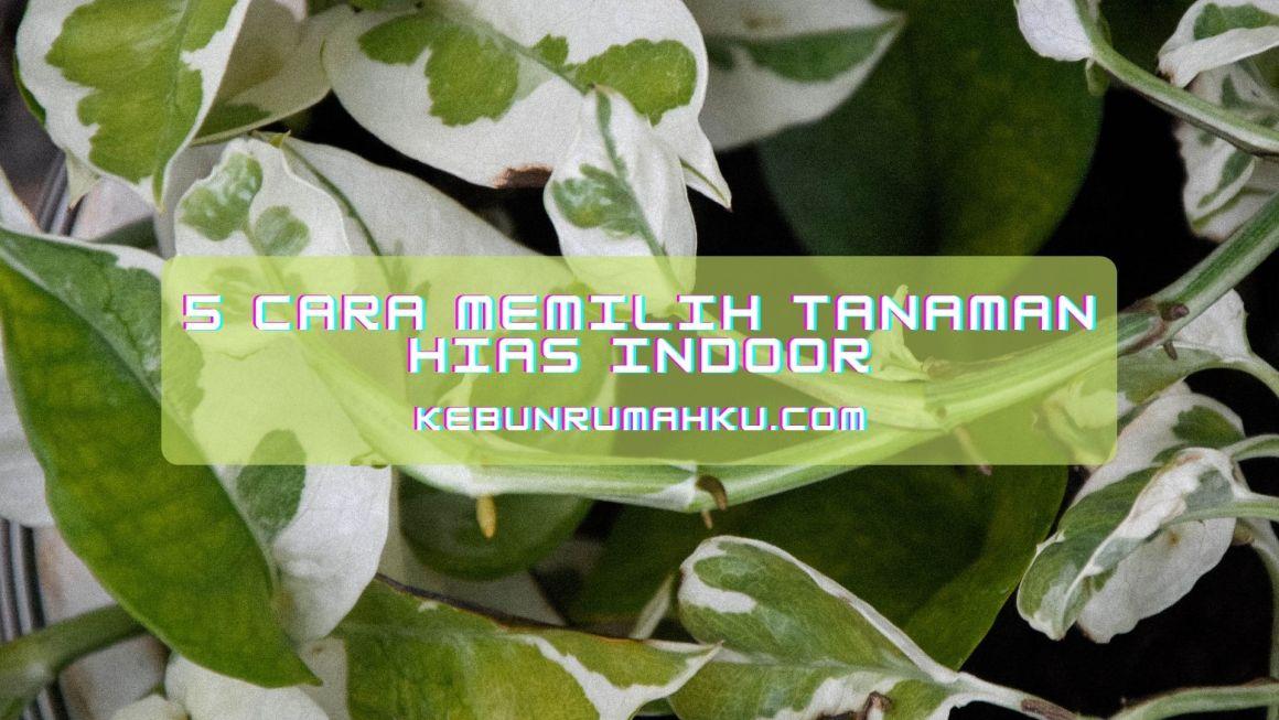 5 Cara Memilih Tanaman Hias Indoor, Tepat dan Efektif!