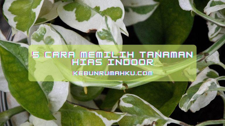 Sudah simak bagaimana memilih tanaman indoor yang tepat? Yuk coba terapkan! (Foto: kebunrumahku.com)