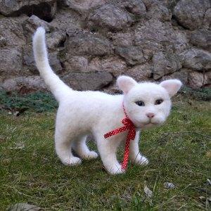 Kedi Mırnav