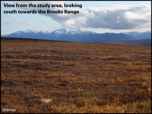 Figure 3.  This view shows the tundra ecoystem of the Brooks Range foothills, as well as the Brooks Range to the south.  The photo is from late August.  In July the tundra is green, with abundant wildflowers.