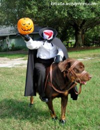 Headless horseman dog