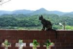 台湾の猴硐(侯硐)猫村について。猫好きが猫村で猫まみれになってきた!