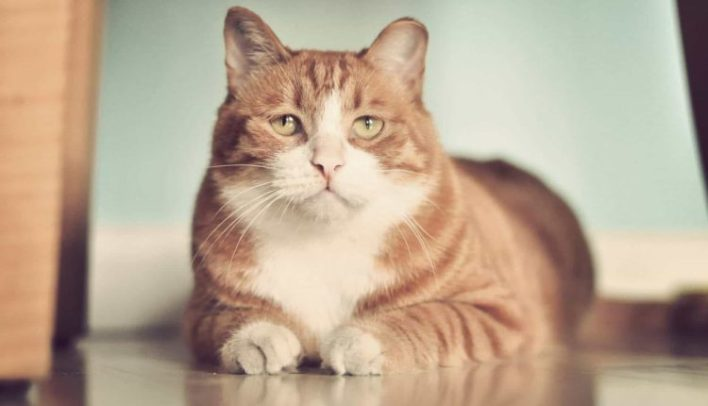ideal-kilonun-ustundeki-kediler