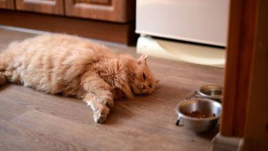 Photo of Kedilerin İştahı Nasıl Açılır? İşte 5 Yolu!