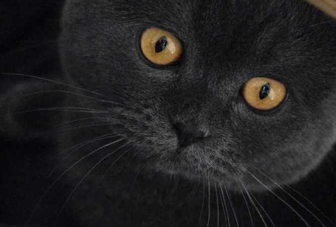 Kediler Hakkında İlginç Bilgiler