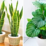 12 szobanövény, amelyek a lakás legárnyékosabb pontján is jól érzik magukat és alig igénylik a törődést!