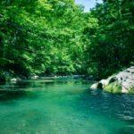 【アクアテラリウム】自然な川の流れを再現!川部分の陸地製作!