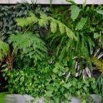【アクアテラリウム】植栽のコツとオススメ植物12選