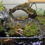 アクアテラリウム  「観葉植物の配置と一石二鳥の植栽方法」を伝授!