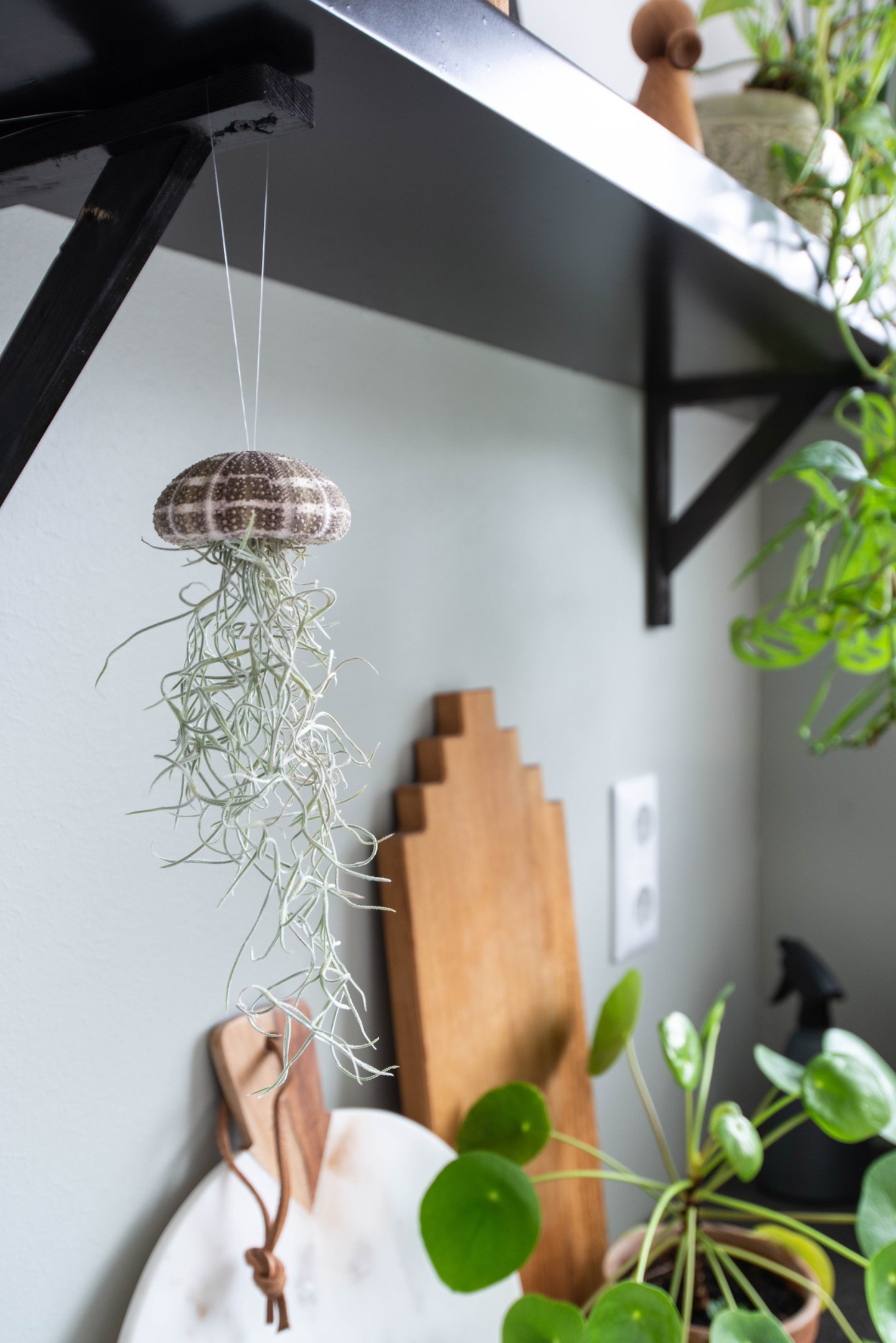keeelly91 airplants luchtplantjes jellyfish airplantshop tillandsia planten woonaccessoires interieur