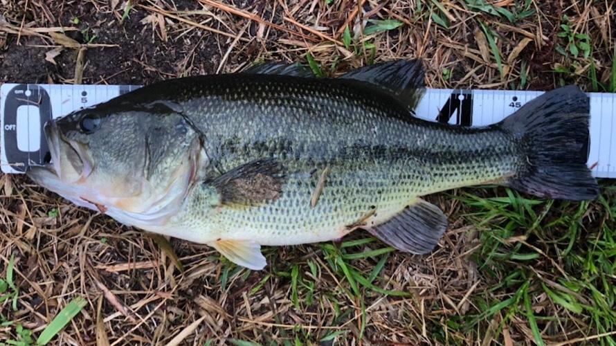 【バス釣りの準備&基本編】バス釣りのタックルやルアー・ワームでの釣り方を教えます。
