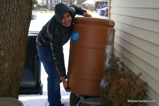 High school intern seen at the back of Keeler Gardens working on placing the rain barrels as he braves the snow and keeps working.