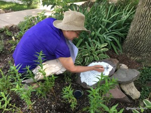 "A local artist, Paula Clayton, has been hired by Keeler Gardens to paint educational signs for our new pollinator habitat. Here, she's crouching in the habitat, painting a sign near a tree that reads, ""Shelter for Wildlife"" with a graphic of a dragonfly in the upper right corner."