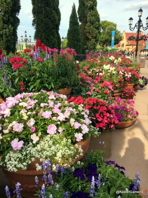In one section of the Terracotta Garden at the 2016 Epcot International Flower and Garden Festival, Italian terracotta pots overflow with blooms. In the front pot is white sweet alyssum and light pink New Guinea impatiens. In the pots just behind are tall blue and purple stalks of blooming salvia mixed with bright red dianthus, and far in the back hot pink New Guinea impatiens and two-tone pink geraniums. Along the bottom of the picture are more stalks of salvia, and deep blue petunias.