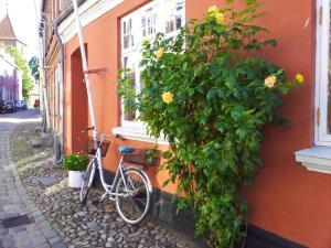 2014-08-de-dk-ribe_roses_800
