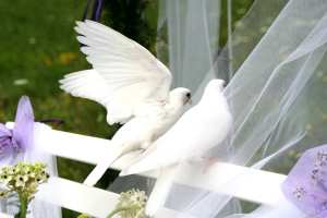 Weddings - A Symbolic Dove Release