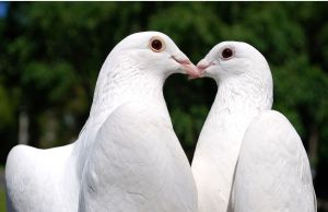 Keene Dove Release About Us