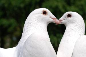 About Keene Dove Release
