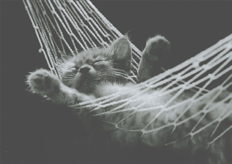 cd3870-kitten-in-hammock-birthday-card