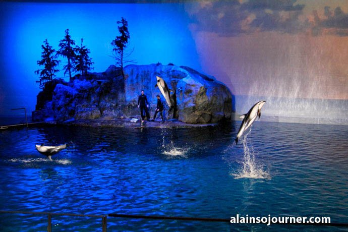 Shedd Aquarium Chicago Things To Do 13
