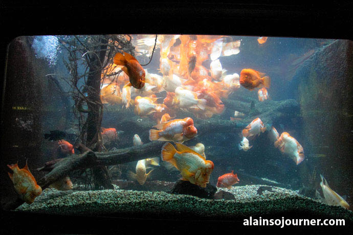 Shedd Aquarium Chicago Things To Do 15