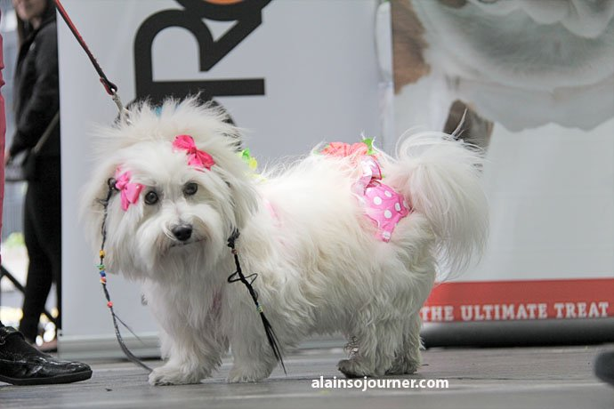 Woofstock Toronto Festival of Dogs 15