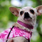Woofstock – Toronto's Festival for Dogs 2013