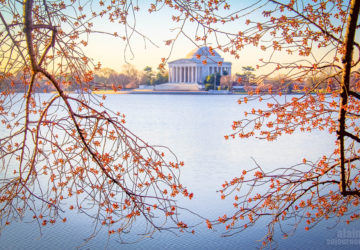 25 Photos of the Cherry Blossoms 2014 in Washington DC