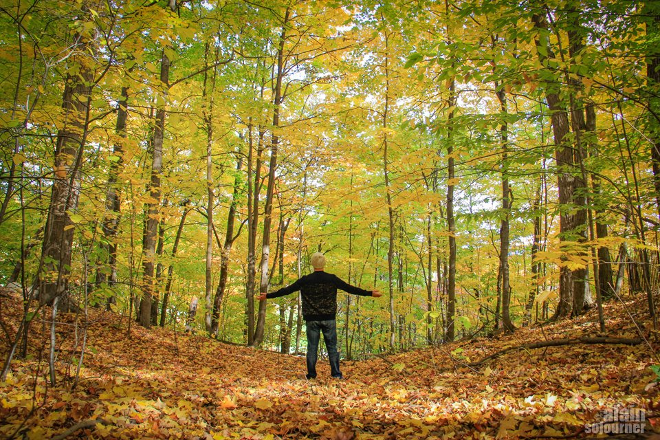 Toronto Crothers Woods