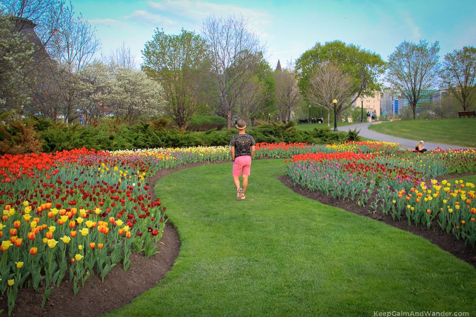 2015 Tulip Festival in Ottawa - Commissioner's Park by Dow Lake.