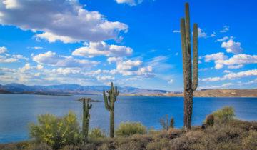 These giant cactuses in Phoenix, Arizona dwarfed me.