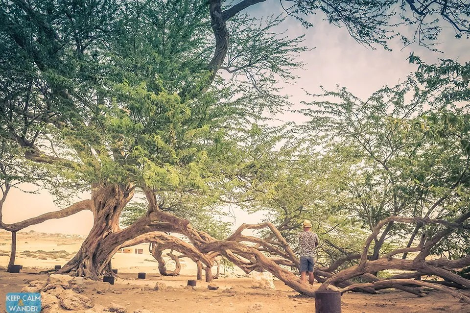 The Tree of Life in Manama, Bahrain- A Miracle in the Desert
