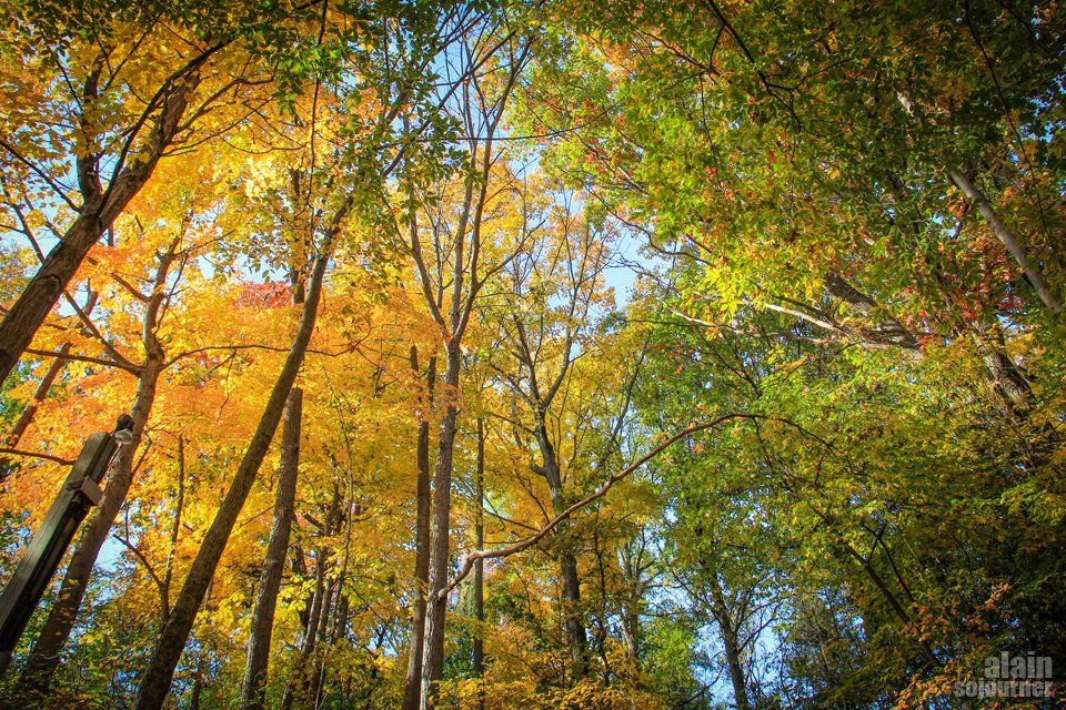 Fall Colours in Crothers Woods Toronto