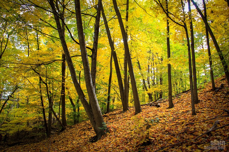 Crothers Woods Fall Colours Toronto