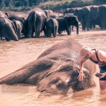 I Bathed an Ellie at Pinnawala Elephant Orphanage and I Instantly Regretted it!