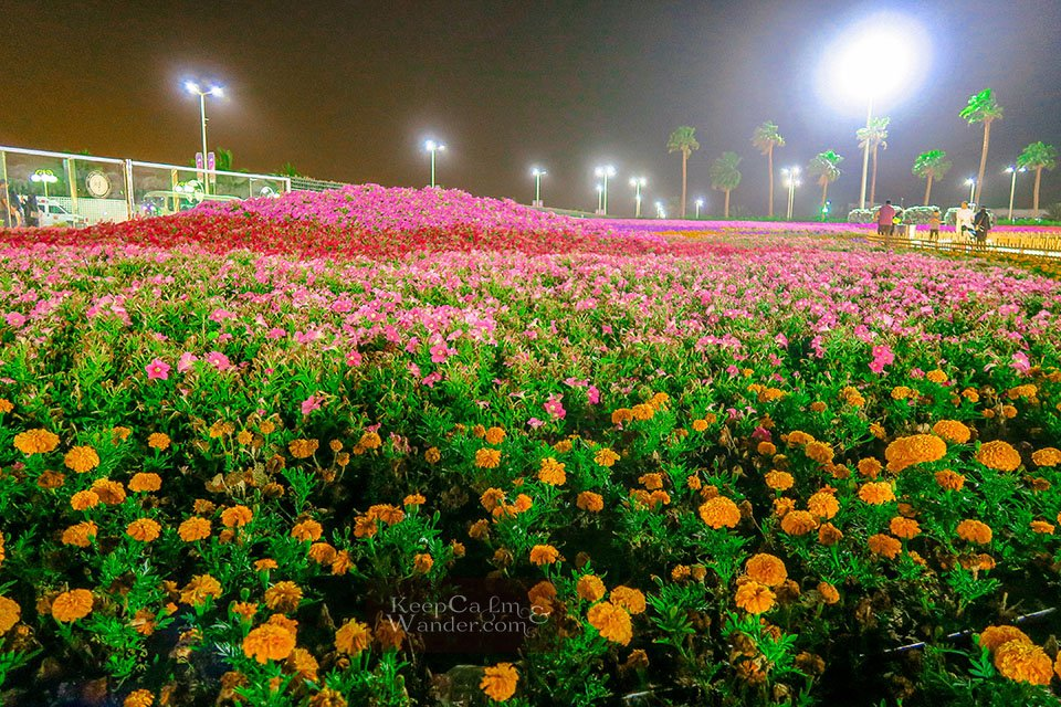 Photos From Yanbu Flower Festival 2018 - The World's Largest Carpet of Flowers (Saudi Arabia).