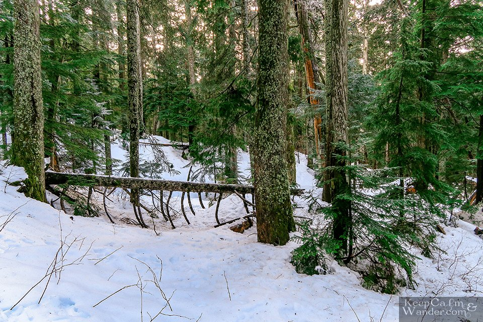 The Hiking Trail to Hollyburn Lodge in Winter (West Vancouver, British Columbia) Canada Parks Travel Blog
