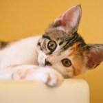 Pet influencers: Most Popular Animals on Social Media