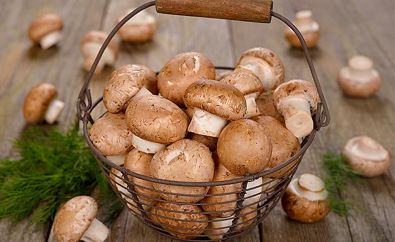 Top 5 Health Benefits of Mushrooms! - Keep Fit Kingdom
