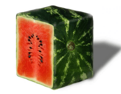 How do they grow square watermelons?