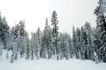 california snow