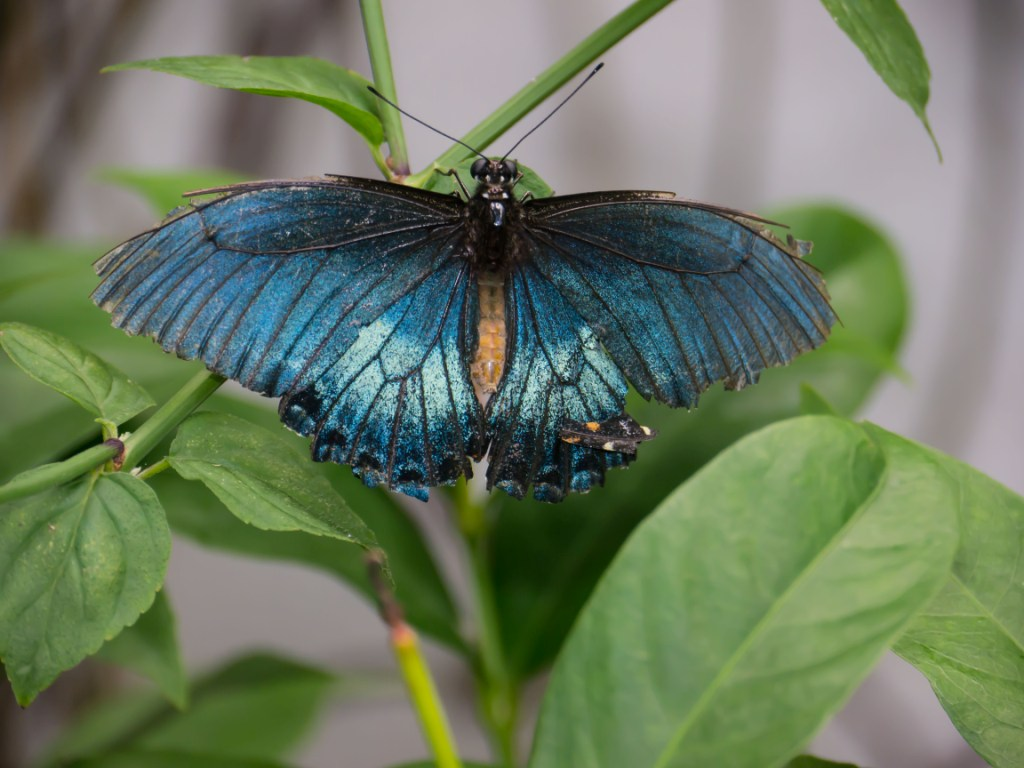 Butterfly World In Coconut Creek Florida Keeping Up