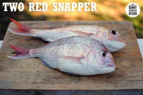 snapper-1