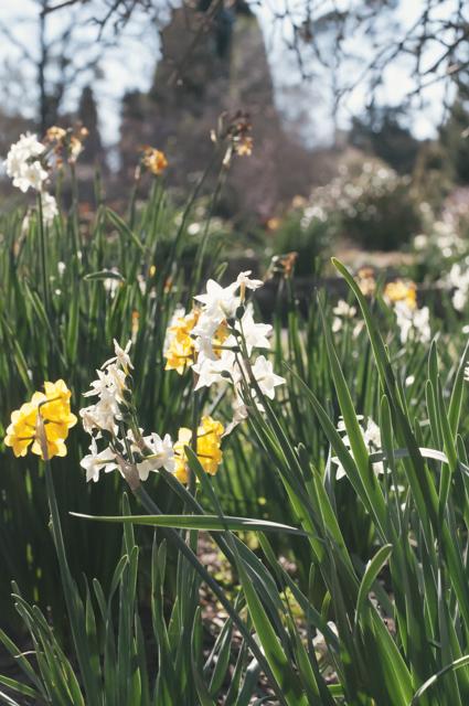 flowers at menabillie manor