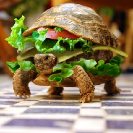 Cute Turtle Wallpaper For Iphone Turtle Burger Keeprecipes Your Universal Recipe Box
